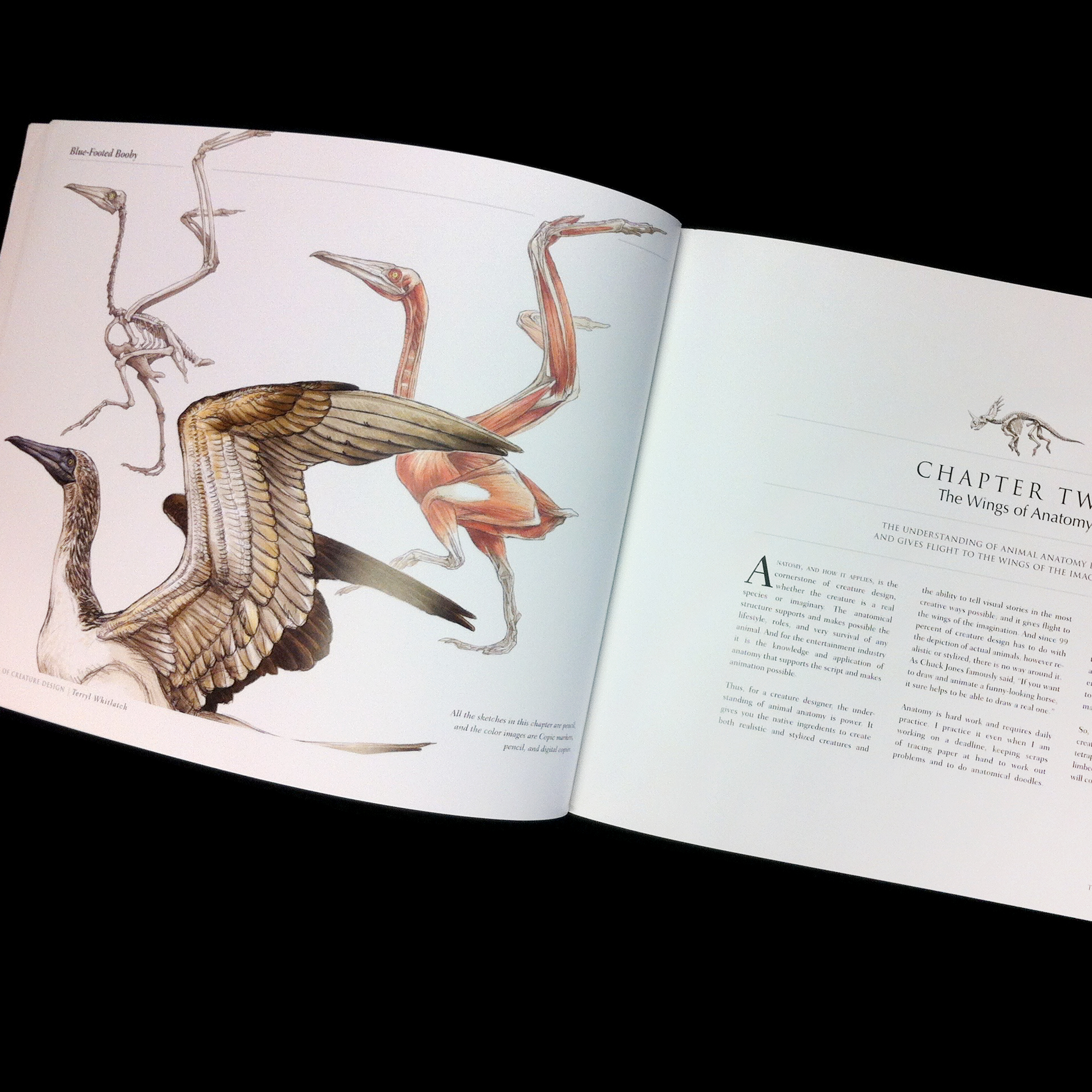 Science Of Creature Design Understanding Animal Anatomy Ctn Store